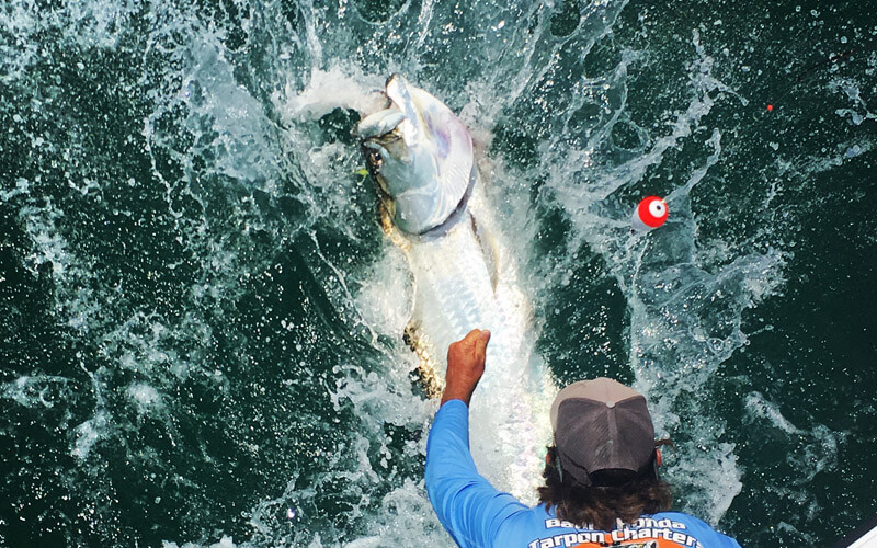 An image of Captain Kevin Grubb with a tarpon in the Lower Florida Keys.